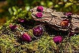Anillo de pétalos de rosa - Joya con flores secas naturales - Anillo ajustable boho vintage botánico - - Regalos originales para mujer - Aniversario - Regalo Reyes - Prime