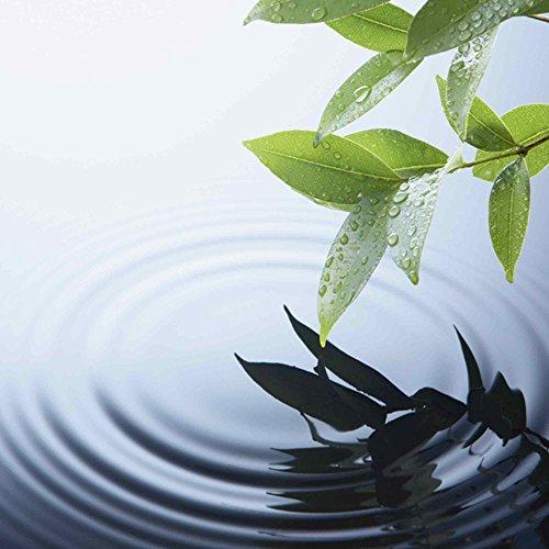 Artland Qualitätsbilder | Glasbilder Deko Glas Bilder 50 x 50 cm Pflanze und Wasser mit Reflektion A5LL