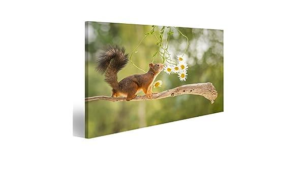 islandburner Tableau Tableaux sur Toile Debout /écureuil Roux sur la Branche darbre avec des Fleurs