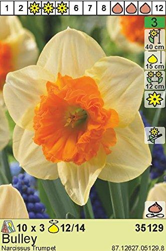 """Narcissus – Narzisse/Osterglocke"""" Bulley"""" (5 Blumenzwiebeln)"""