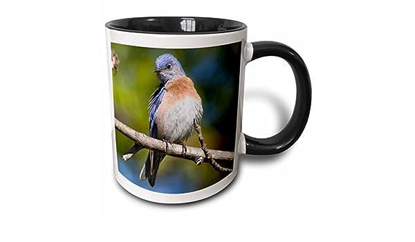 Buy 3drose Mug 88385 4 California San Diego Western Bluebird Us05 Djo0073 Diane Johnson Two Tone Black Mug 11 Oz Black White Online At Low Prices In India Amazon In