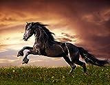 B-wie-Bilder.de XXL Poster Fototapete Tapete Vlies Pferd in der Wildnis 2 Material Vlies ohne Kleber, Größe 100 x 80 cm