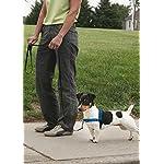 PetSafe Easy Walk Deluxe Harness, Ocean Blue 9