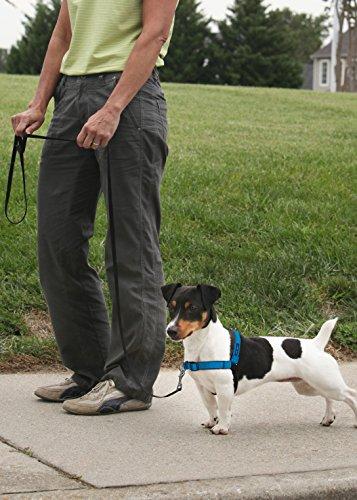 PetSafe Easy Walk Deluxe Harness, Ocean Blue 4