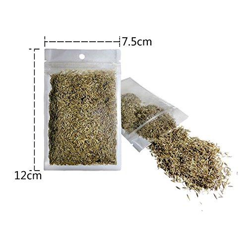 aubess Wasserpflanze Samen Pflanzen Ornament Wasserpflanze Samen Aquarium Dekoration Pet Feed (Mini Haar Gras) (Echte Live-aquarium Pflanzen)