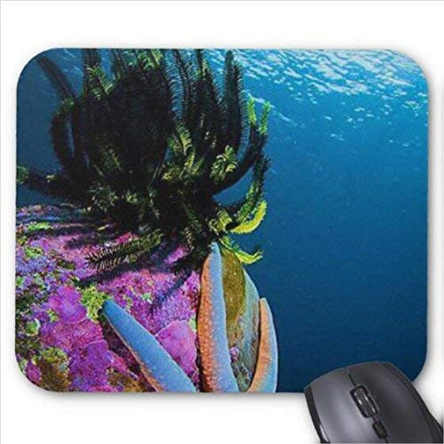 J5E7JYTE Coral Reef Sea Star Blue Mouse Pad -