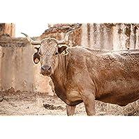 """Fotografía de autor para decorar:""""Vaca"""". Tamaño y soporte a seleccionar"""