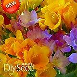 Vendita calda 7 colori Semi Eustoma perenne piante da fiore in vaso Fiori Semi Lisianthus Semi -! 100 PCS, # 6TH1R1