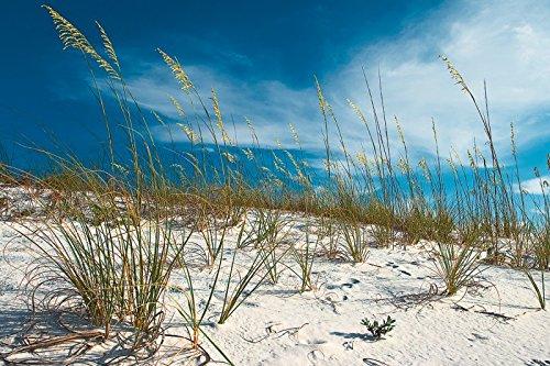 Artland Qualitätsbilder I Wandtattoo Wandsticker Wandaufkleber Nickolay Khoroshkov Sanddüne und Gräser unter schönem blauem Himmel. Destin, Florida, USA Landschaften Strand Fotografie Blau D8OA