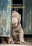 Hundeblicke 2019 - Wandkalender A3, Fotokalender, Tierkalender  -  29,7 x 42 cm