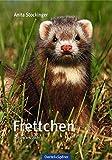Frettchen: Haltung und Zucht