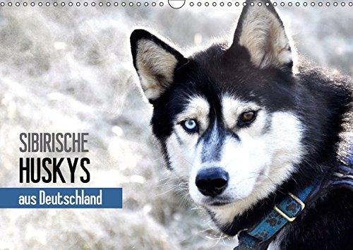 Sibirische Huskys aus Deutschland (Wandkalender 2018 DIN A3 quer): 17 Huskys auf der Schwäbischen Alb! (Monatskalender, 14 Seiten ) (CALVENDO Tiere) [Kalender] [Apr 01, 2017] Hentschel, Andrea