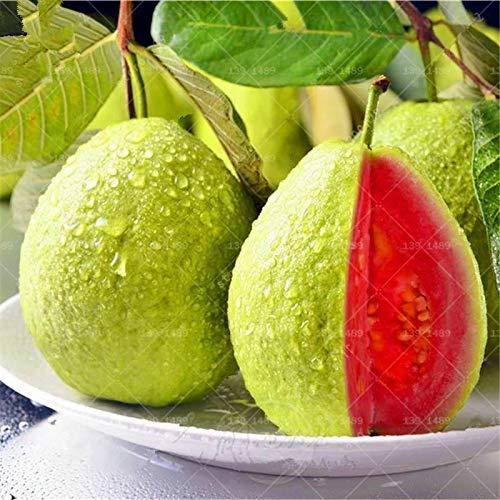HATCHMATIC Fruit Rare Dutch légumes semences Non OGM Survl Organique