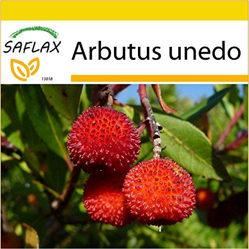 SAFLAX - Kit de culture - Arbousier - 50 graines - Arbutus unedo