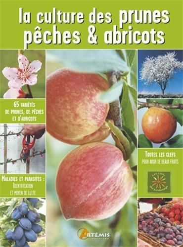 La culture des prunes, pêches et abricots