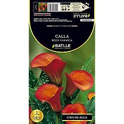 Semillas Batlle 076848Bols - Bulbo Calla Rojo-Naranja