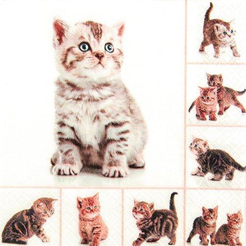 20 Servietten Meow - Verspielte Katzen / Tiere / Tiermotiv 33x33cm -