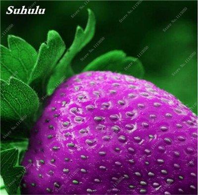 Grosses soldes! 200 Pcs Escalade Graines de fraises non-OGM Tropical Fruit Graines Cour et Balcon extérieur Plantons pour jardin 5