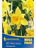 Mega- Pack Narzissen Osterglocken gelb