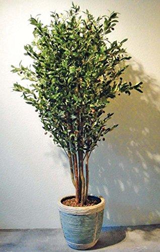 Exklusiver Olivenbaum Kunstpflanze mit Früchten ca. 150 cm getopft!