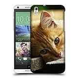 Just Phone Cases Schutz Hülle TPU Case Schutzhülle Silikon Tasche Dünn Transparent // V00004287 Katze liegend auf Holzbrettern // HTC Desire 816