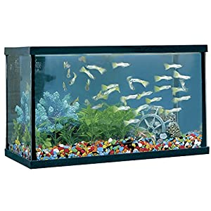 ICA HP8 Happy Fish Aquarium, Black