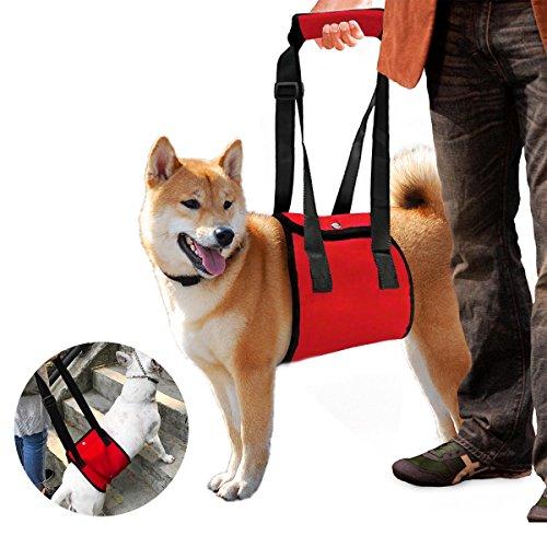Color You Hundegeschirr Tragehilfe für Verletzungen Schwache Hinterbeine Gelenke Chirurgie Rehabilitation (L)