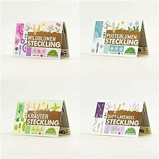 Steckling Set für Duftlavendel, Käuter, Wildblumen & Pusteblume! Alle 4 Sorten kaufen und 10% sparen.