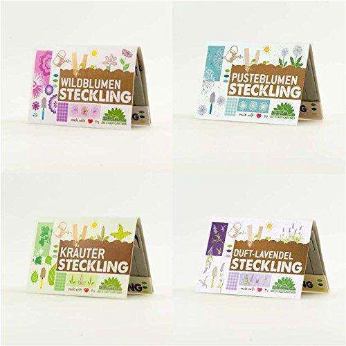 Steckling Set für Duftlavendel, Käuter, Wildblumen & Pusteblume! Alle 4 Sorten kaufen und 10{c26d8e4b0e7c706be568aef799f47fd132c3768f1614608e8684ea496099a56b} sparen.