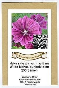 Wilde Malve - Dunkelviolett - Malva sylvestris var. mauritiana - Zier-/Arzneipflanze - 250 Samen von exotic-samen bei Du und dein Garten