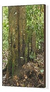 Toile artistique avec arbre (Phallus Termite Dicuspiditermes)