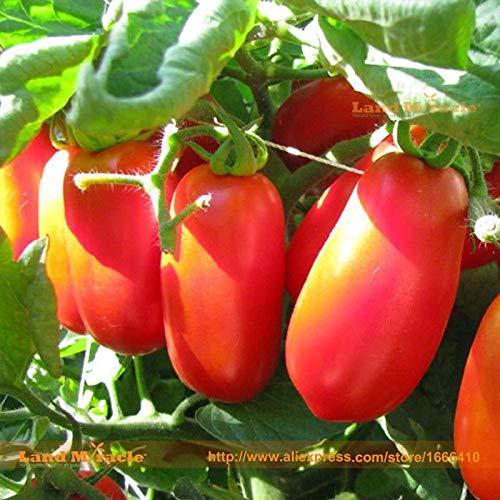 PLAT FIRM GERMINATIONSAMEN: Italienischer Roma-Tomatensamen, 100 Samen/Pack, organische dickhäutige rote Tomaten Fru - Tomaten-pack