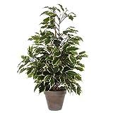 Decorazioni Mica 981063Exotica Ficus in Stan pentola, Poliestere, Poliestere,verde/bianco, H. 65 cm D 55 cm