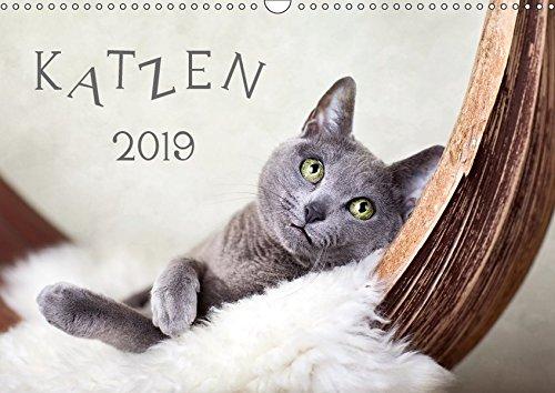 Katzen 2019 (Wandkalender 2019 DIN A3 quer)