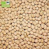 500g Bio Sojabohnen aus Italien Plastikfrei in Papiersack verpackt Soja | 0,5 kg ✔ Keimfähig | unbehandelt | asiatische Küche | Keimfähig für Sojasprossen | in kompostierbarer Verpackung | STAYUNG