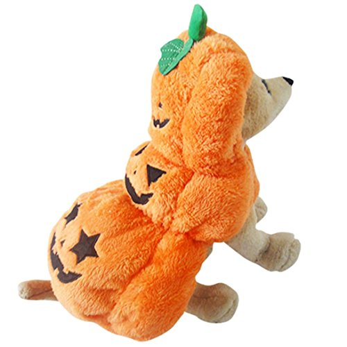 Ninasill ღ ღ Halloween Kürbis Cool Süßer Hund Pet Cosplay Dick Kostüm Kleidung Casual X-Large Orange
