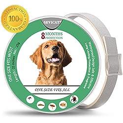 PROZADALAN Collares Antiparasitario para Perros pequeños, medianos y Grandes, Impermeable, Protección contra Pulgas y Garrapatas Natural Protección Eficaz contra Las Pulgas (Perros) (1)