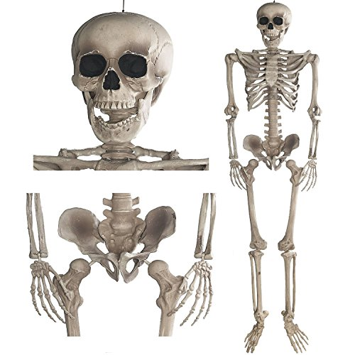Deko Skelett 160 cm - Party & Halloween Dekoration Ganzkörper Horror Skeleton