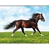 mundo de los caballos : Cuadro Infantil