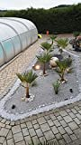 Kamilux GmbH 230V SMD 3W = 25Watt LED warmweiss Aussenspot Gartenbeleuchtung Bodenstrahler Piso inkl. GU10 Hochvolt Leuchtmittel