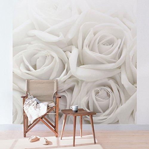 Apalis Rosentapete - Vliestapete - Weiße Rosen - Blumentapete Quadrat   Vlies Tapete Wandtapete Wandbild Foto 3D Fototapete für Schlafzimmer Wohnzimmer Küche   Größe HxB:192x192cm Blumen-print-tapete
