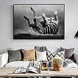 yhyxll Zebra Wall Art Stampe su Tela Animali Moderni Quadri su Tela a Parete Zebra in Bianco e Nero Che rotolano nella Polvere Immagini 60x90cm