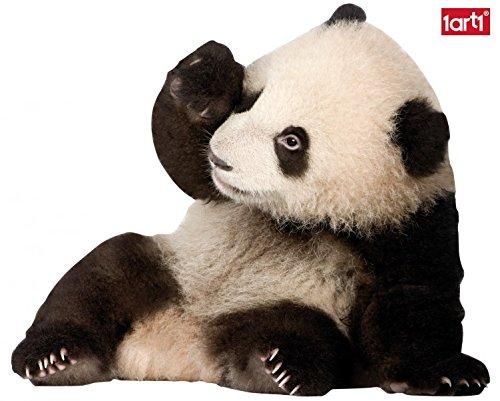 1art1 59960 Bären - Panda-Baby Wand-Tattoo Aufkleber Poster-Sticker 48 x 40 cm