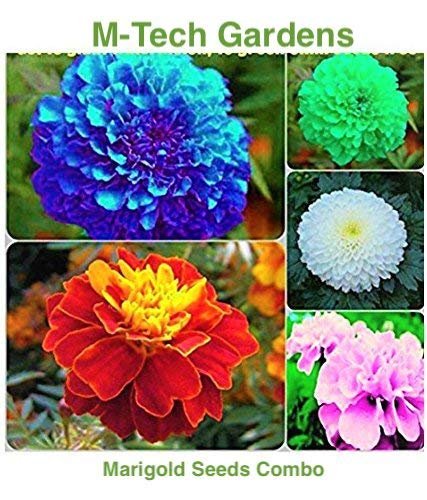 M-Tech Gardens Marigold Flower Seeds Combo - Blue, Red, Pink, White, Yellow (All Seeds Mixed 30 Seeds)