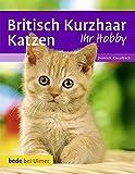 Britisch Kurzhaar Katzen bei Amazon kaufen