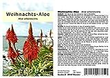 Seedeo® Weihnachts-Aloe (Aloe arborescens) 10 Samen