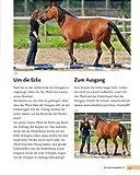 Bodenarbeit mit Pferden: Abwechslungsreiche Übungen, die Spaß machen - 10