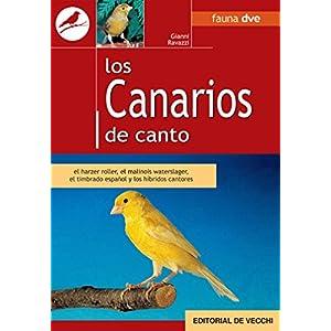 Los canarios de canto