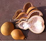 Seeds:Natural Gourd Bailer Water Wine Container Spoon Half Piece : 30 to 35cm