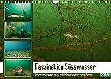 Faszination Süsswasser (Wandkalender 2019 DIN A4 quer): Unterwasserimpressionen aus mitteleuropäischen Seen (Monatskalender, 14 Seiten ) (CALVENDO Tiere)